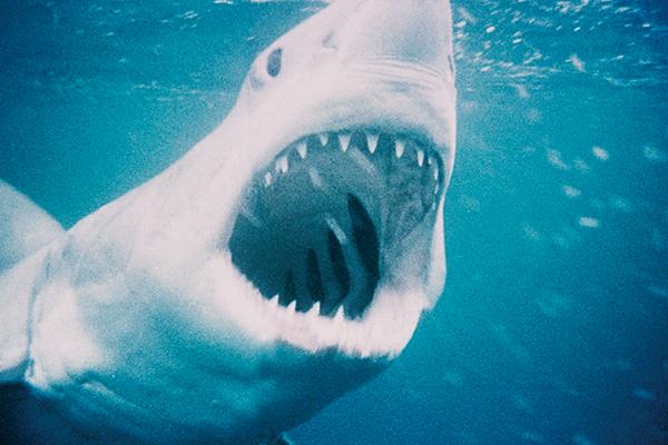 JAWS/ジョーズ Jaws